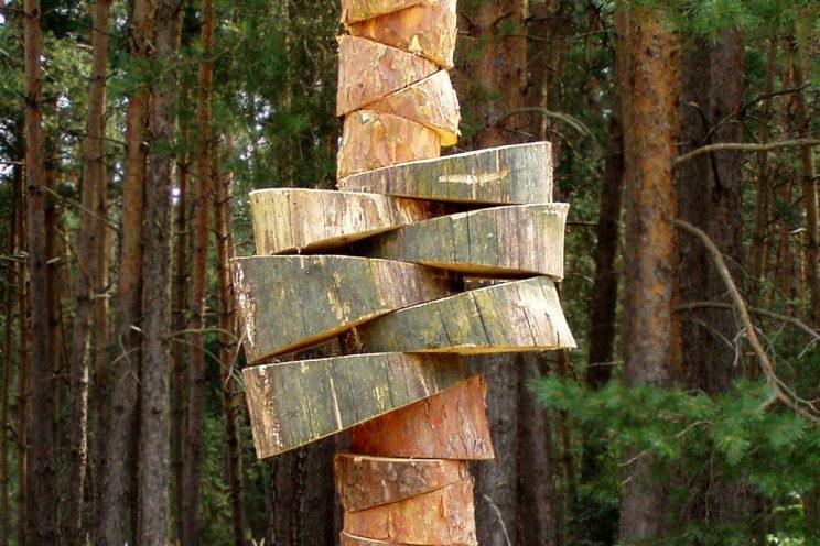 mit der Natur arbeiten - Baummetamorphosen